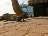 20140217-2014_02_17 Aruba-2071.jpg