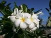 20140223-2014_02_23 Barbados-3286.jpg