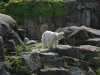 20160528-14_29_05_ Zoo Berlin-7678.jpg