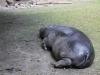 20160528-14_29_05_ Zoo Berlin-7688.jpg