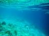 20140219-2014_02_19 Bonaire-2101.jpg