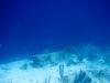 20140219-2014_02_19 Bonaire-2318.jpg