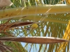 20140219-2014_02_19 Bonaire-2457.jpg