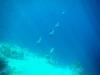 20140218-2014_02_18 Curacao-1758.jpg