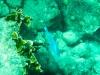 20140218-2014_02_18 Curacao-1784.jpg