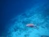 20140218-2014_02_18 Curacao-1815.jpg