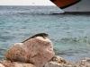 20140218-2014_02_18 Curacao-2150.jpg
