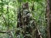 20140225-2014_02_25 Dominica-3562.jpg