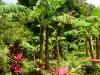 20140225-2014_02_25 Dominica-3649.jpg