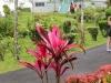 20140222-2014_02_22 Grenada-2943.jpg