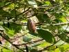 20140222-2014_02_22 Grenada-2971.jpg