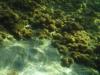 20120101-Unterwasserwelt-0097.jpg