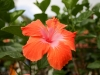 20140224-2014_02_24 St_ Lucia-3528.jpg