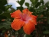 St_Lucia_2014_27